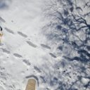 snow-shoe-hike-2875538_1920